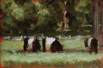 Oil Painting of Belted Galloway Cows
